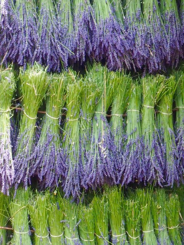 Lavender harvest, Provence, France