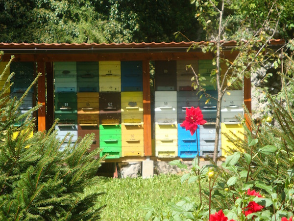 Bee Conservation, Slovenia