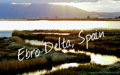 Ebro Delta Delights