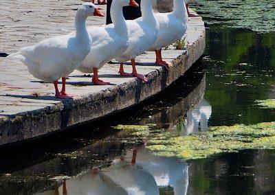 All in a row, Greece, Kastoria, Greece