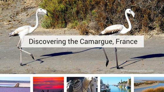 Camargue's Stunning Diversity