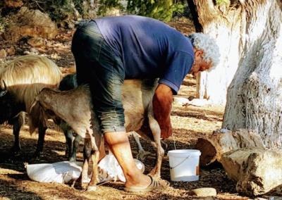 Goatmilk, Sfinari, Crete