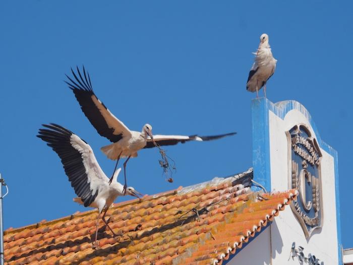 Comporta Storks,Portugal