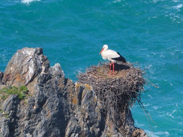 Storks nesting,Portugal