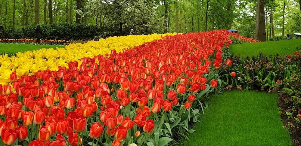 Keukenhof tulips beds