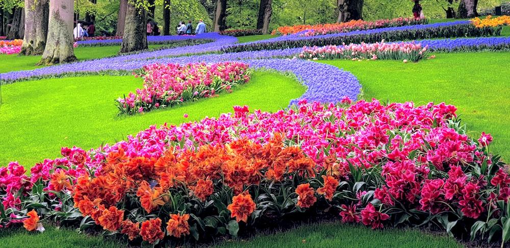 Keukenhof flower beds
