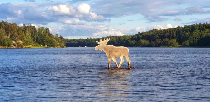 Stockholm Moose, Sweden