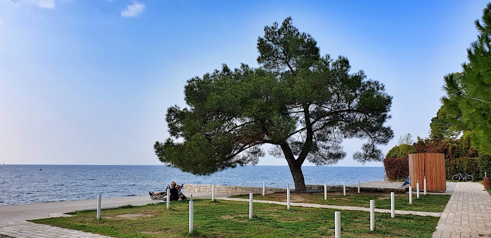 Strunjan coastline