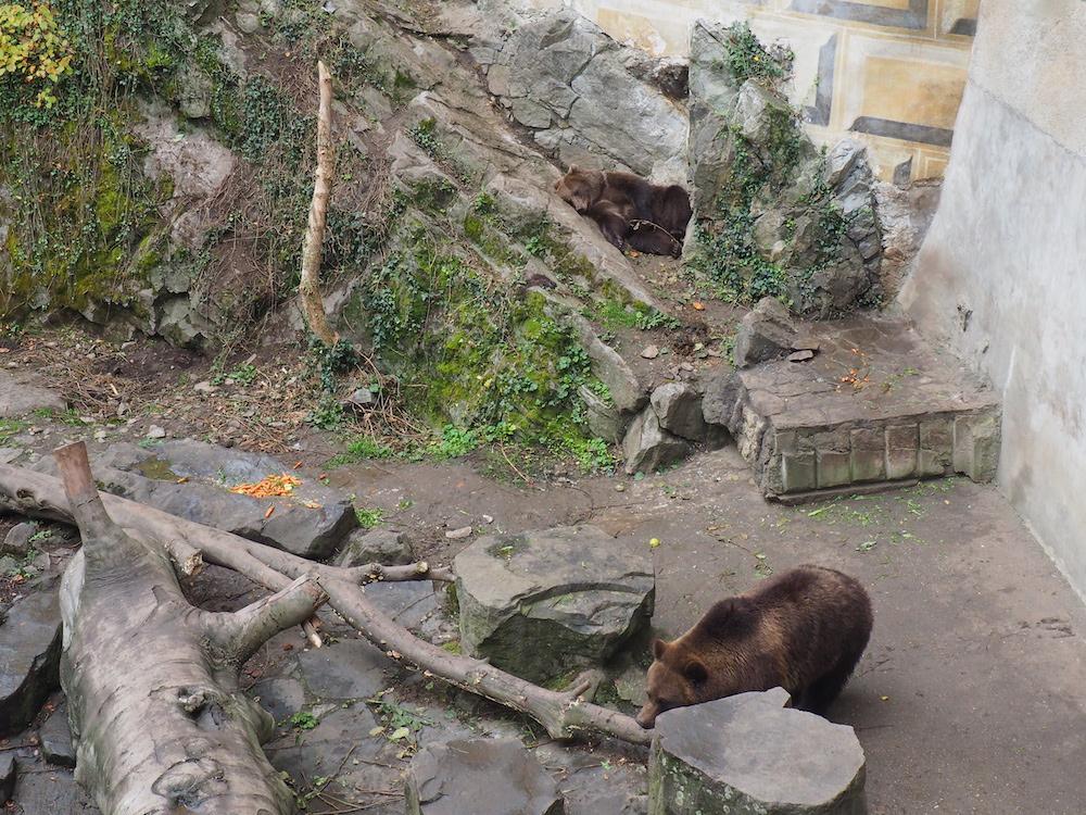 Cesky Krumlov Captive Bears