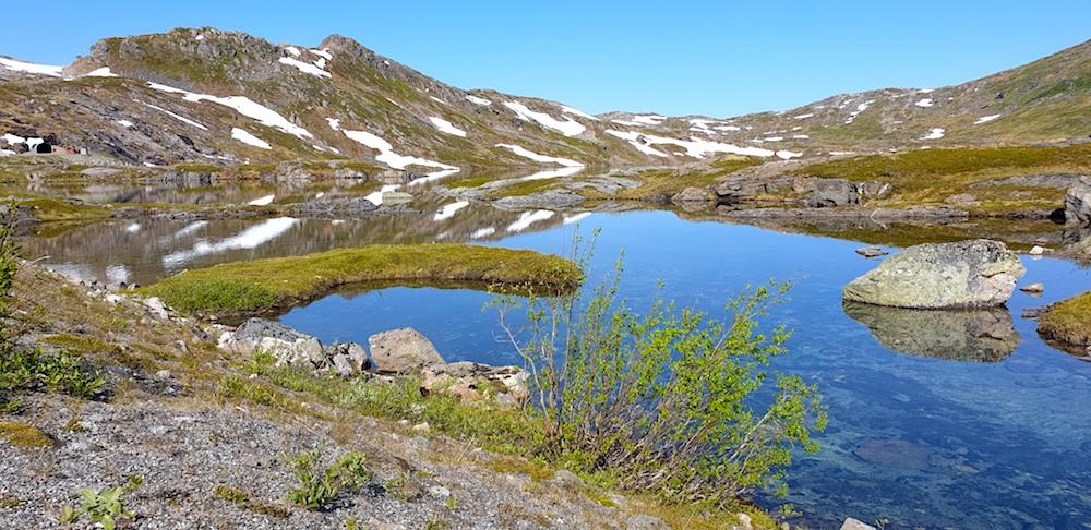 Anderdalen NP Senja Norway
