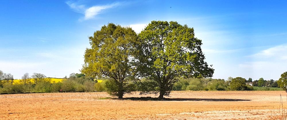 ross trees